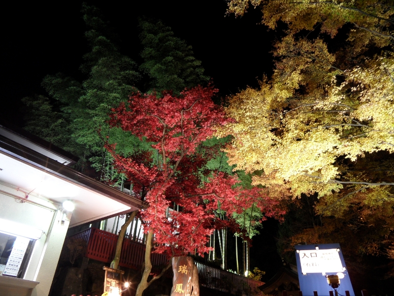 Trees with leaves in red, yellow and green by night, illumnated from below. Strong contrast to the black background.